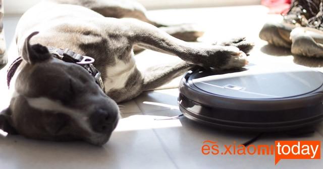iLife A4 mascotas
