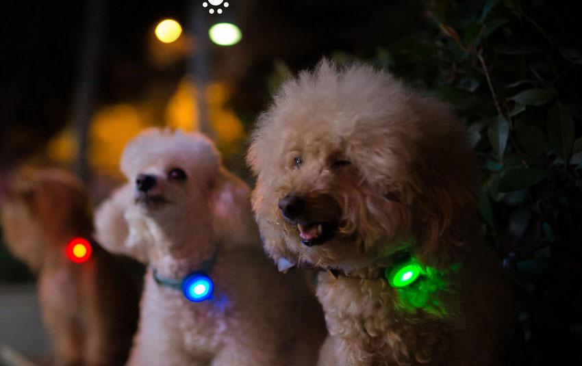 Xiaomi Smart Dog Button Tag, el smartband canino de Xiaomi