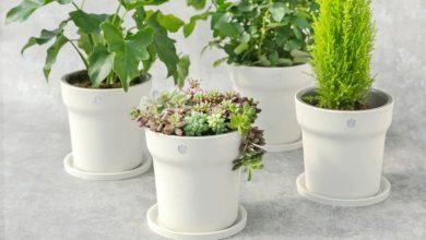 Xiaomi Youpin Flower Pot Monitor la maceta que te ayuda a cuidar de tus plantas