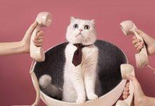 Cama para gatos de Xiaomi